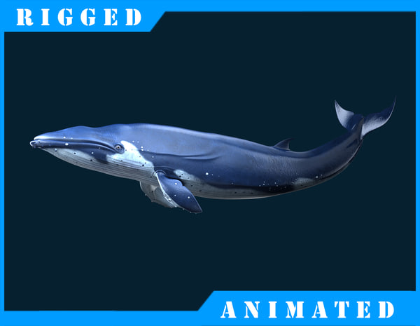 blue rigged 3d fbx
