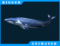 Blue_Whale_Rigged