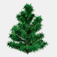 3d small fir tree