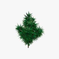 small fir tree max