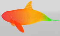 3d model grampus whale
