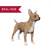 3d model of realistic chihuahua real-time real time