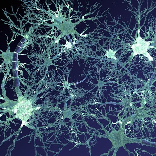 3d model neural network