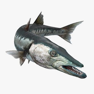 barracuda fish rigged 3d model