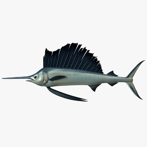 indo-pacific sailfish 3d model