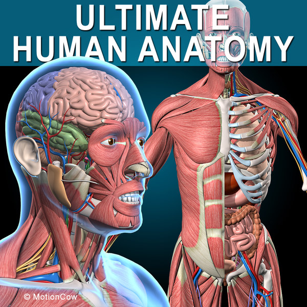 3d human anatomy ultimate