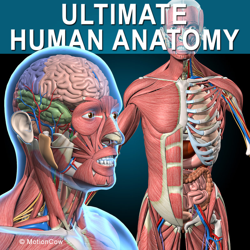 Anatomy 3d Models For Download Turbosquid