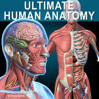 Ultimate Human Anatomy