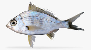 3d model yellowfin mojarra