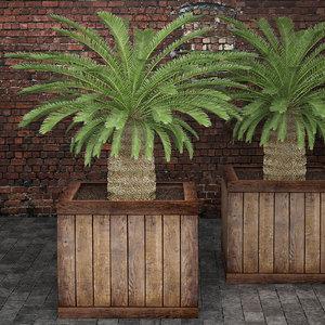 3d model cycas palms tree