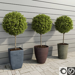 outdoor plants boxwood trees 3d model