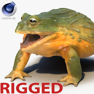 african bullfrog rigged 3d c4d