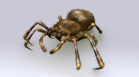 obj spiders arachnids