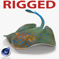 c4d blue spotted stingray rigged