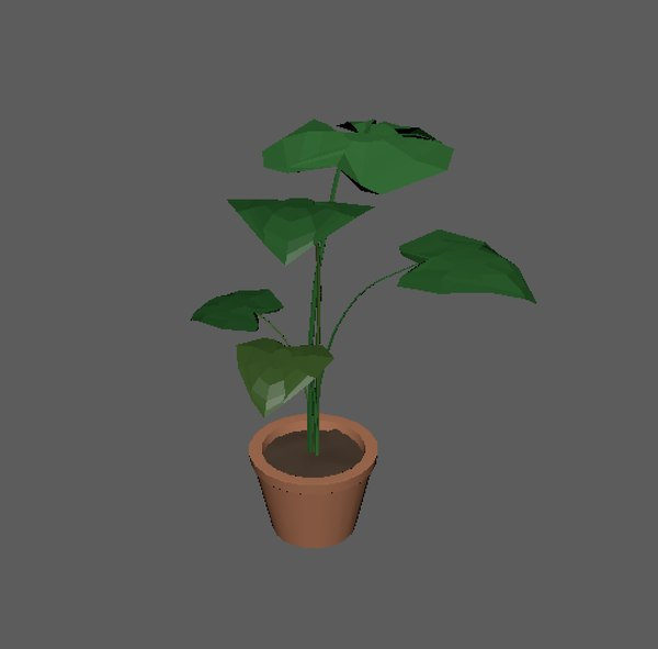 monstera plant pot ma free