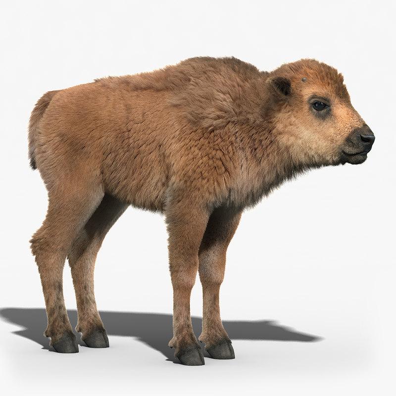 american bison baby fur max