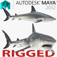 Caribbean Reef Shark Rigged for Maya