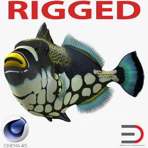 3d model clown trigger fish rigged