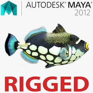 clown trigger fish rigged 3d ma