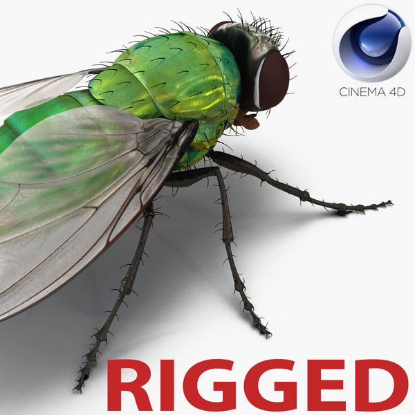 green bottle fly rigged c4d