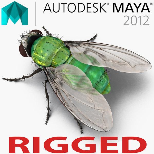 3d model green bottle fly rigged