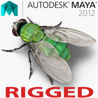 3d model green bottle fly rigged