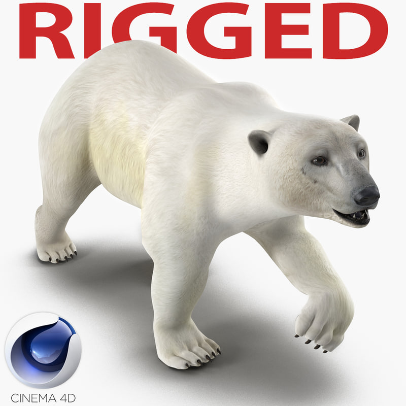 c4d polar bear rigged
