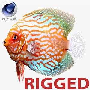 c4d symphysodon fish rigged