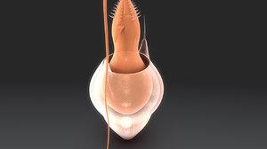 cnidocyte 3d model
