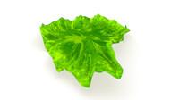 porphyra seaweed obj