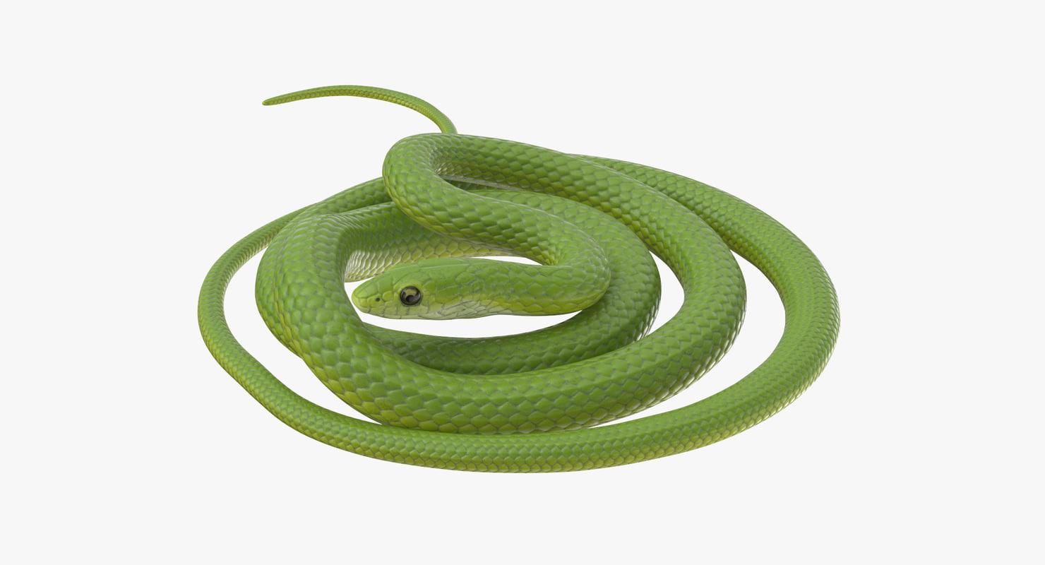 green snake 02 3d model