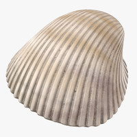 heart cockle shell 3d model