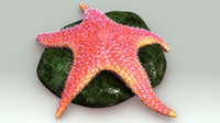 3d echinoderms model