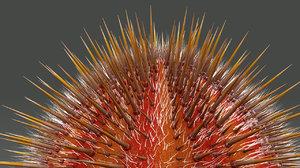 sea urchins 3d model