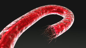 3d hookworm worms model