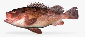 3d model of brown rockfish