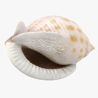 3d scotch bonnet shell