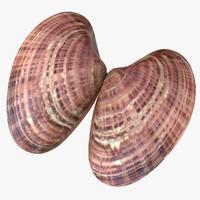 sunray venus shell 3d obj