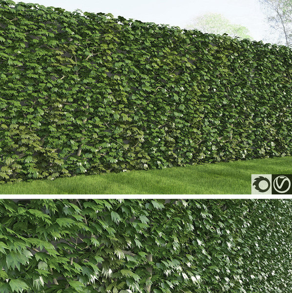 3d rich ivy model