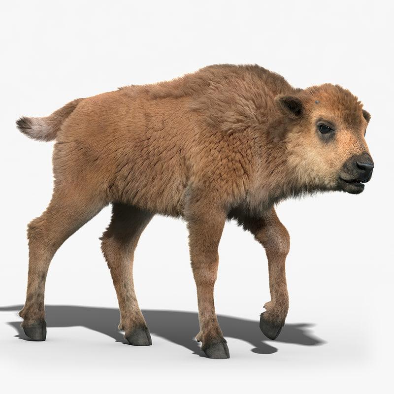 3d model of american bison baby fur