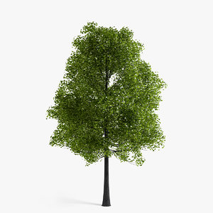 linden tree 3d obj