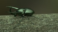 Chalcosoma Atlas beetle Textured  (no rigging)