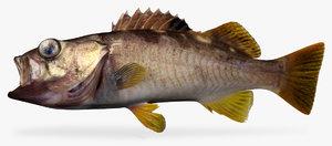 3d model olive rockfish