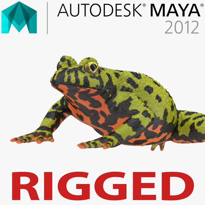 bellied toad frog rigged 3d ma