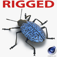 3d model gibbifer californicus beetle rigged