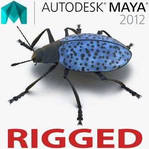 3d gibbifer californicus beetle rigged model