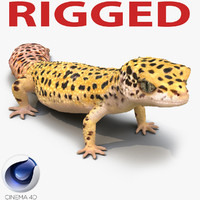 3d leopard gecko rigged model
