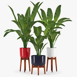 palm banana max