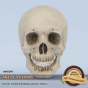 3d model of skull anatomy