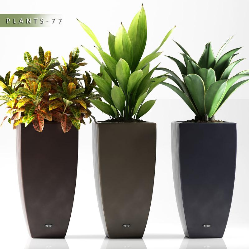 plants 77 max